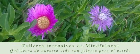 mindfu-intensivos